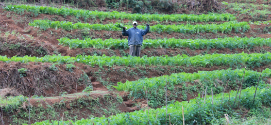 Hamisi employs excellent agriculture best practices such as crop rotation and terraced farming to respect the soil while maximizing productivity. Just look at that Chinese cabbage!